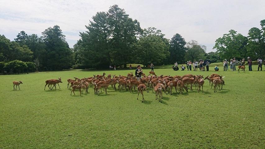 鹿寄せホルン