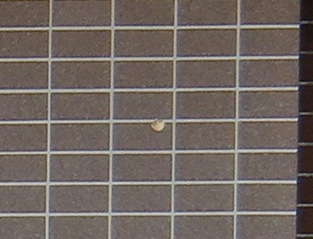 (ドローン撮影)外壁タイルの欠損
